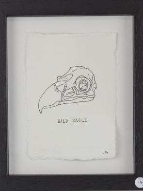 Skull-of-a-Bald-Eagle.jpg