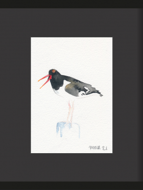 12-OYSTER-CATCHER