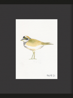 23-RINGED-PLOVER