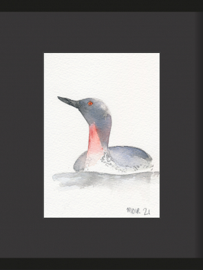 32-RED-THROATED-DIVER