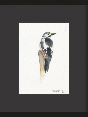 6-GREAT-SPOTTED-WOODPECKER