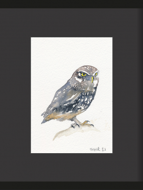 9-LITTLE-OWL