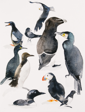 BLACK-SEA-BIRDS-ORIGINAL